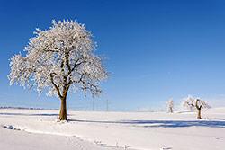 Galerie Winterlandschaften